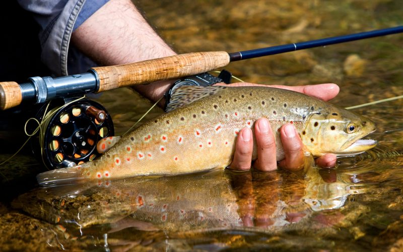 iStock-149067927_Fly-Fishing_Trout-1